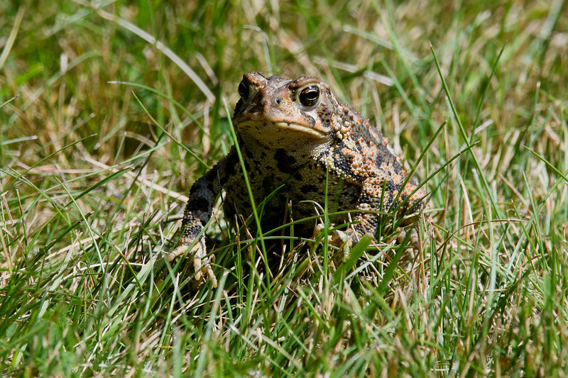 Toad-2672