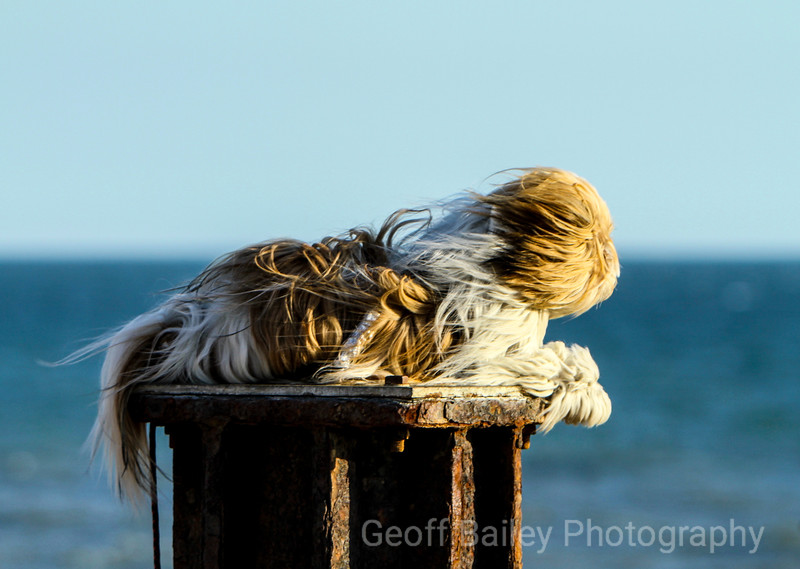 Dog on a Post