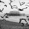 Seagulls & West Pier