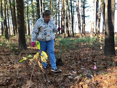Kathy Knowles and her family volunteer to restore the few marble headstones at the Pines Cemetery. Photo by Mary Leach
