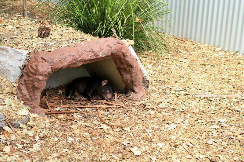Australia vicious predators :P