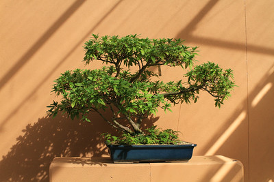 Bonsai at Botanical Gardens
