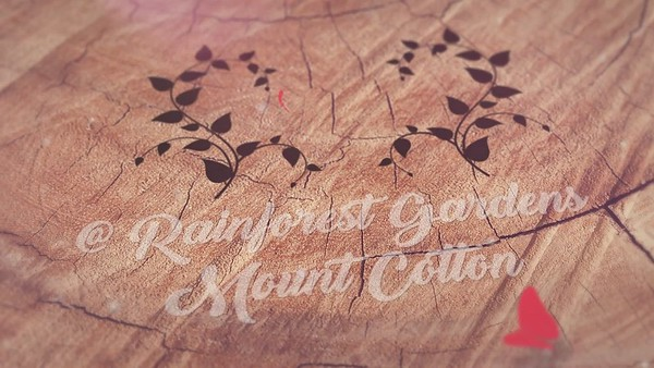 Savana and Michael Wedding Slideshow at Rainforest Gardens rev 2_mp4