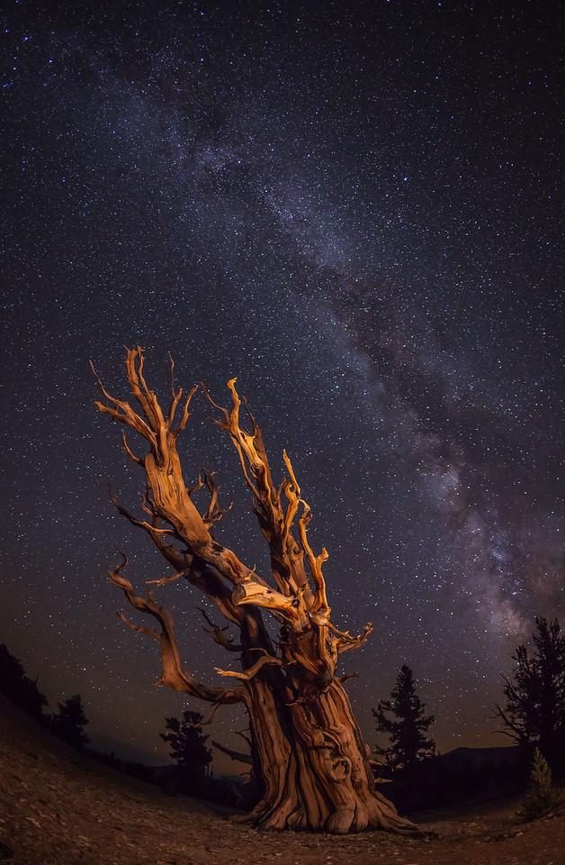 Bristlecone Pine light painted