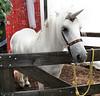 <h2>Kira, the unicorn