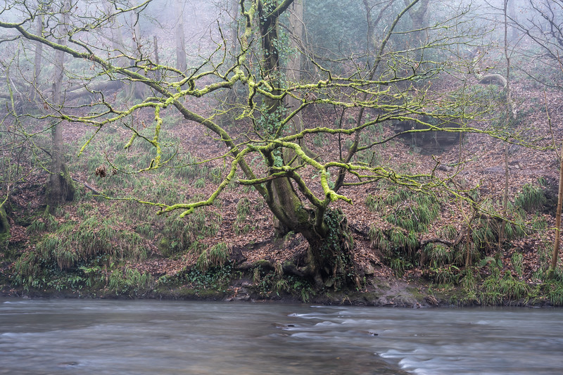 Frome Valley at Snuff Mills