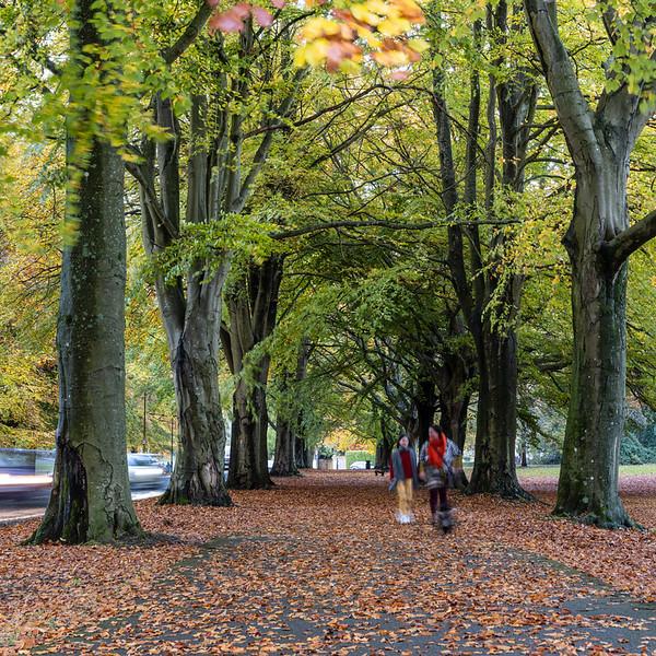 Clifton Down in autumn