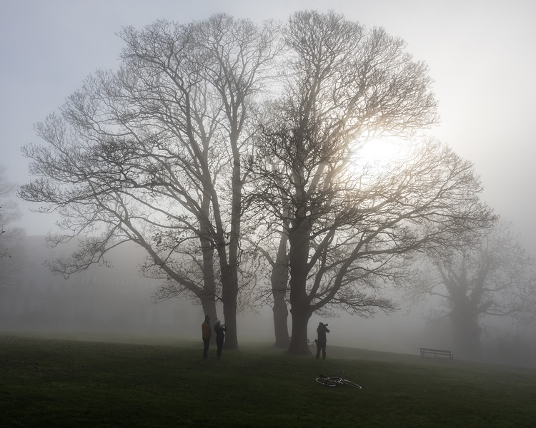 Misty trees on Clifton Down