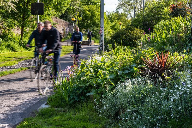Spring flowers on the Bristol and Bath Railway Path