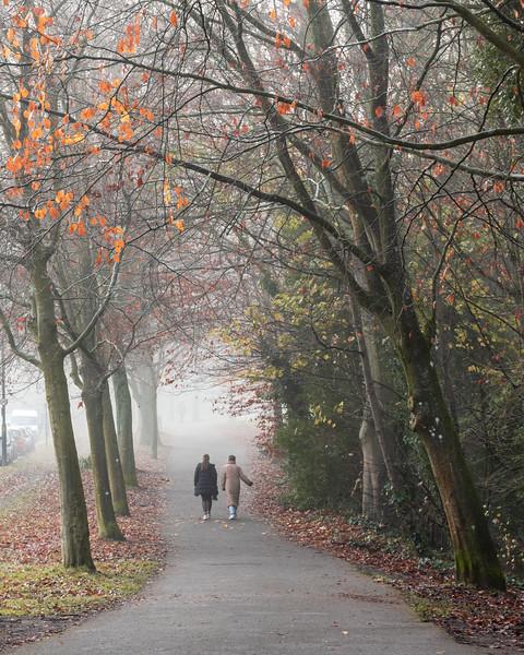 Fog on Clifton Down