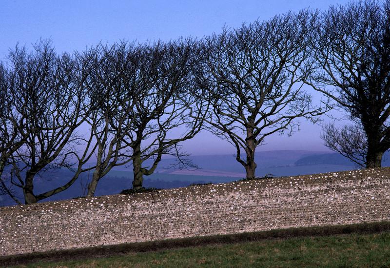 Bear Road Trees