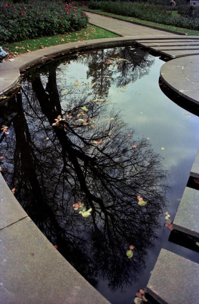 Winter Reflection, Preston Park