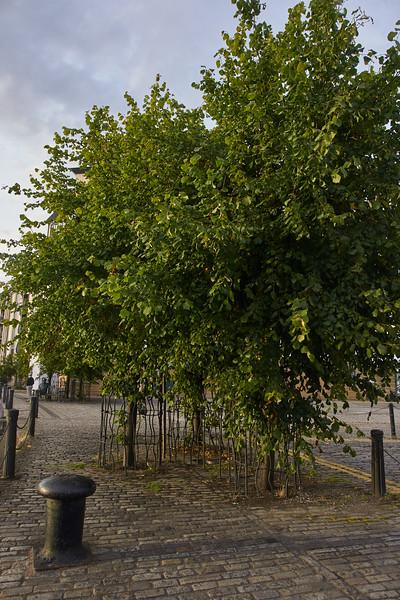 Leith Trees