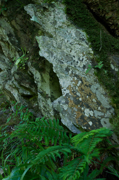 Rock and Fern on the Watersmeet trail