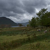 Sheep Grazing by Ullswater