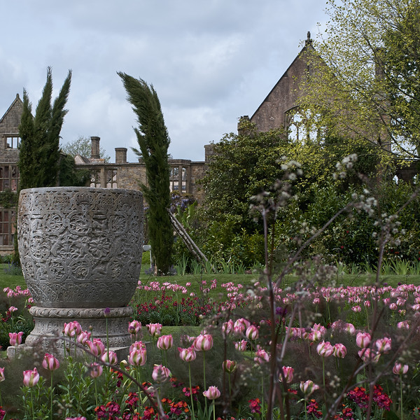 Stone Urn and tulips