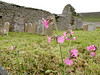 Ruined church near Midhowe Broch on Rousay