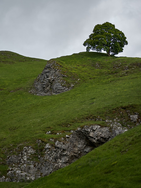 Lone Tree on Winnats Pass
