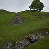Lone Tree on Winnats Pass