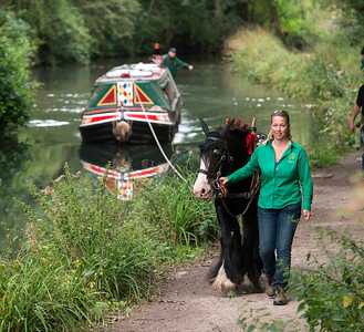 vintage English narrow boat Birdswood,being pulled by a horse, on the Cromford Canal,near Matlock,Derbyshire, UK. taken 24/08/2014