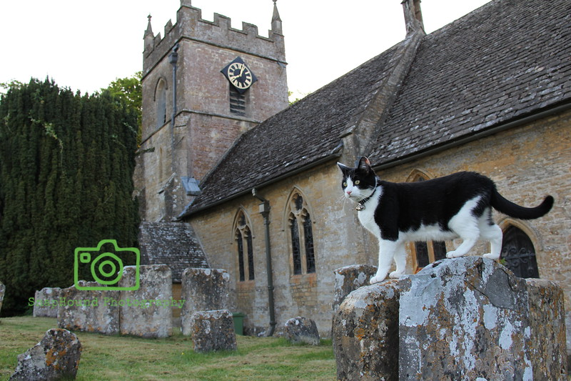 St Peters Church Cat, Upper Slaughter, Cotswolds, England
