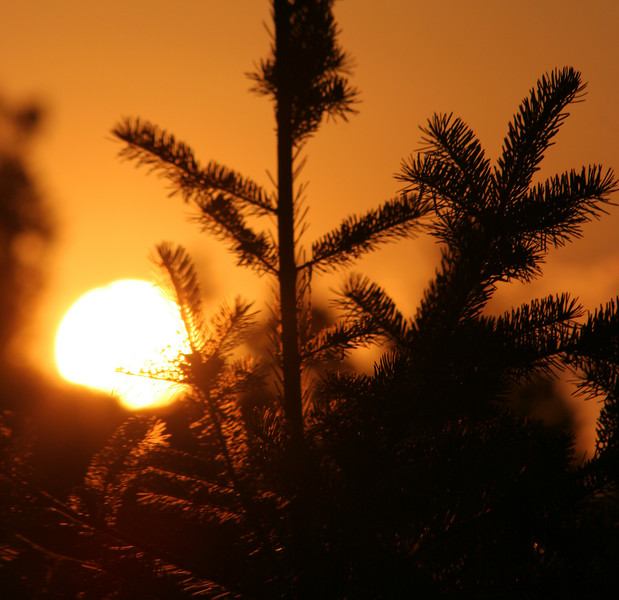 Fir tree at sunset_IMG 3167