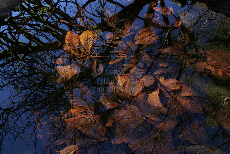 ~ Winter Reflections ~<br /> <br /> A gentle creek pool holds what is left of last falls leaves while reflecting the same trees they hung from.
