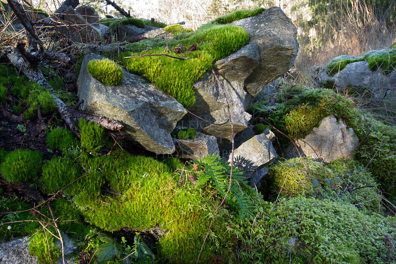 I love how the mosses find their place in a forest<br /> <br /> Image# 3305