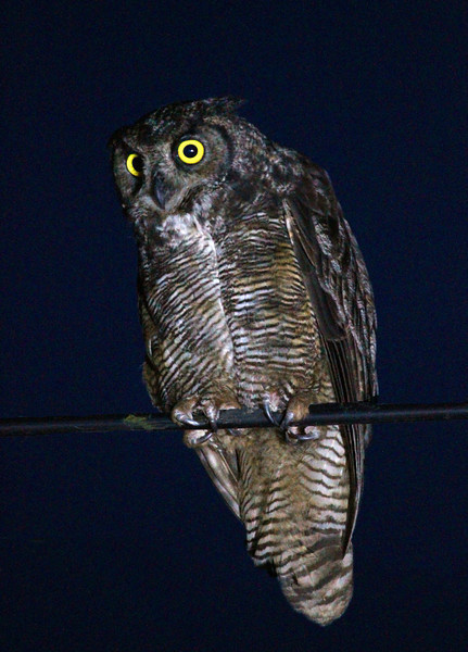 Camera	 Canon EOS-1D Mark IV ISO	 12800 Focal Length	 400mm Aperture	 f/5.6 Exposure Time	 1s (1/1) Name	 X_HORNED OWL_BC.jpg Size	 3013 x 4195 Date Taken	 2011-07-23 22:41:24