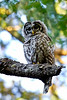 Camera	 Canon EOS-1D Mark IV ISO	 400 Focal Length	 500mm Aperture	 f/9 Exposure Time	 0.1s (1/10) Name	 LRH_4108_Barred Owl.jpg Size	 3264 x 4896 Date Taken	 2013-07-13 19:59:44