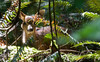 Young deer spots me in a deep forest: BC, Canada<br /> <br /> Image # 2759