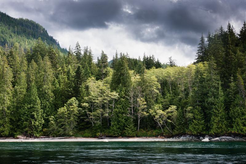 Trees and Cloud, Quadra Island