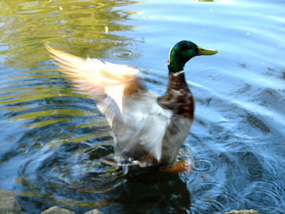 Action duck!