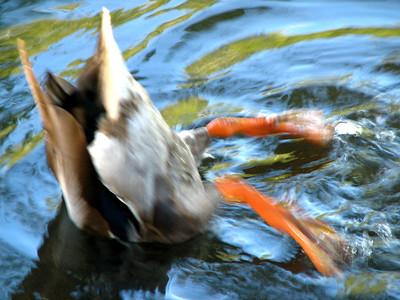 Duck butt!