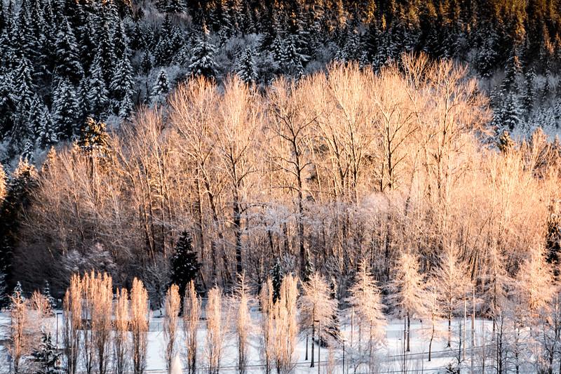 A Winter Morning Spotlight