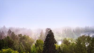 One Foggy Morning
