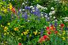 Summer wildflowers on Mount Revelstoke, British Columbia, Canada.