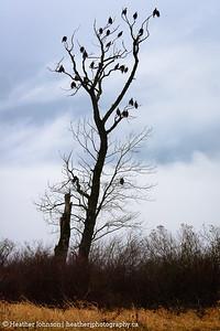 Flock of Eagles