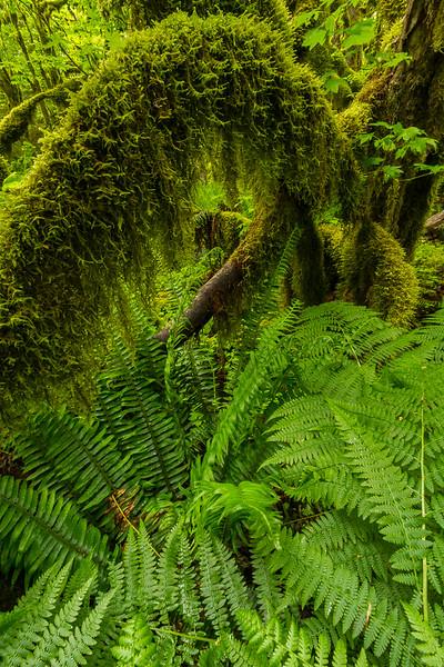 Moss Arch