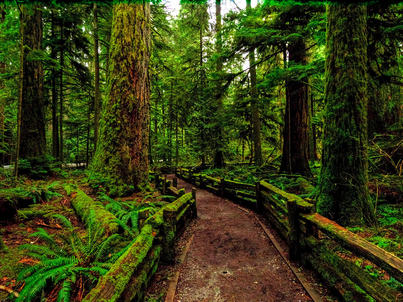A rainy day at Cathedral Grove
