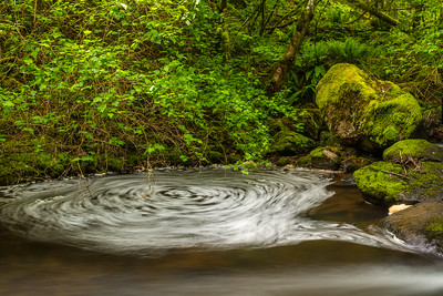 Whirlpool in the Forest