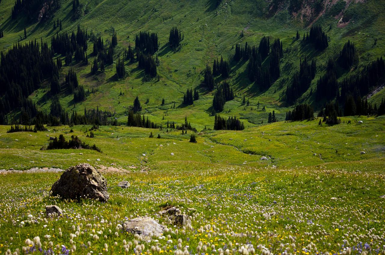 Alpine Meadows, Pemberton