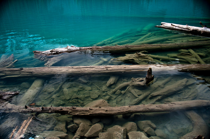 Logs in the lake