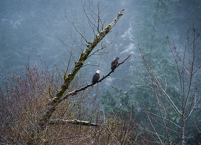 From the Bald Eagle capital of the world: Squamish BC
