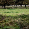 Charlecote Park