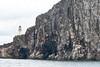 Bass_Rock_Scotland_2019_British_Isles_0012