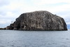 Bass_Rock_Scotland_2019_British_Isles_0018