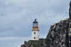Bass_Rock_Scotland_2019_British_Isles_0007