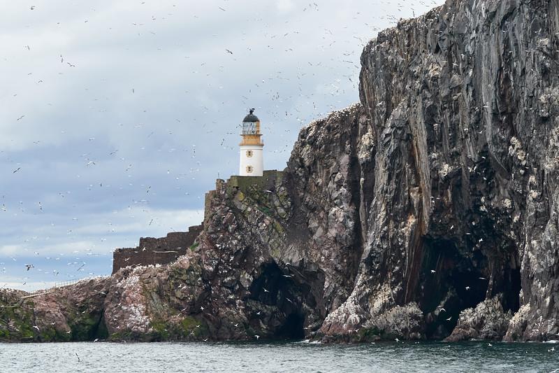 Bass_Rock_Scotland_2019_British_Isles_0001