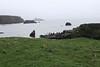 Fair_Isle_Shetland_Islands_Scotland_2019_British_Isles_0017